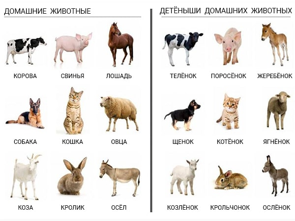 прикрепить названия детенышей домашних животных с картинками довольно