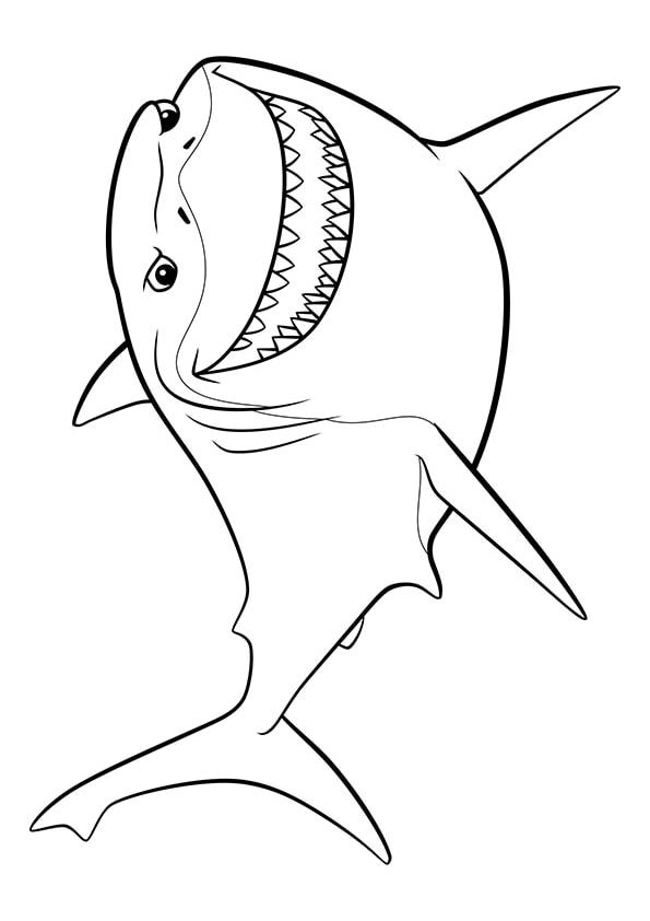 Раскраска Белая акула Бугор | В поисках Немо | Чудо ребенок