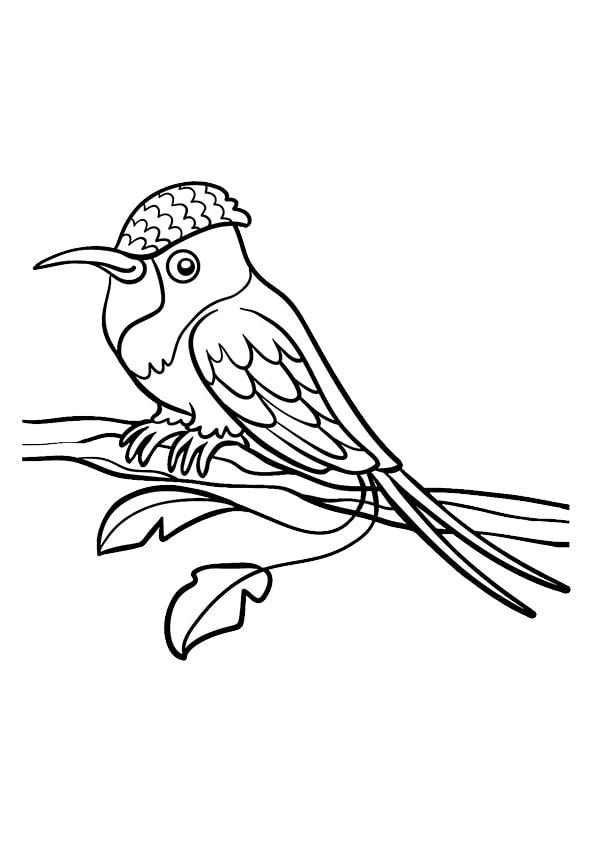 Раскраска для малышей Ракетохвостый колибри | Чудо ребенок