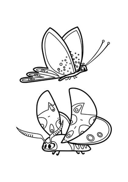Раскраска Бабочки скачать или распечатать